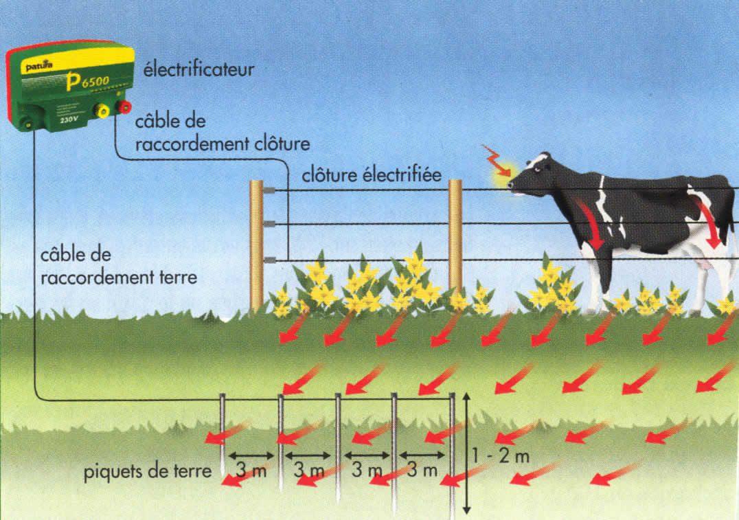 Faire Cloture Pas Cher le cheval en extérieur : les différents types de clôture